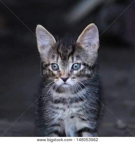 Gray striped adorable tabby kitten on rural yard background