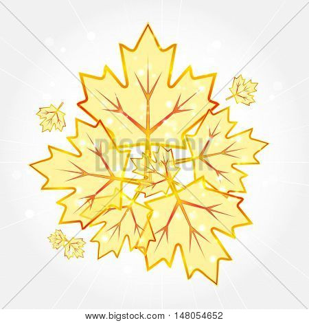 Abstract transparent autumn maple leafs. Vector Illustration