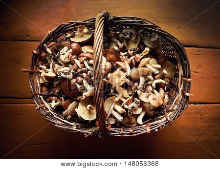 Fresh forest different mushrooms in the basket