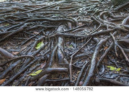 Pattern of wet tree root network on the ground.