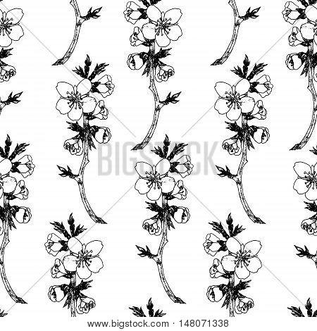 Spring Seamless Monochrom Pattern With Sakura Flowers