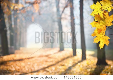 autumn colonade with a gateway and yellow bladesshallow depth of field