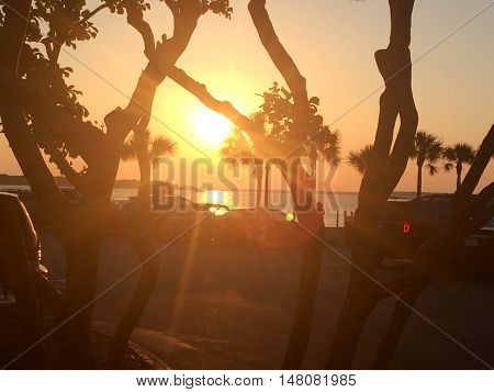 sunset through bent tree trunks  in Hilton Head