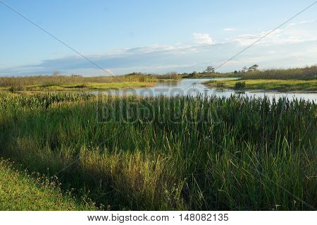 beautiful marsh with tall grass and a river