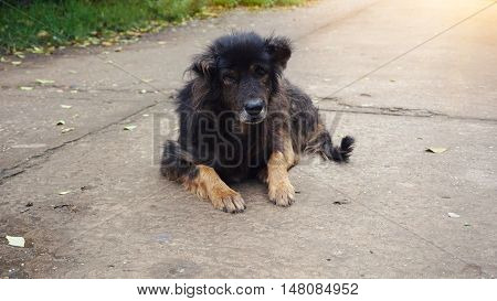 old dog on the street, homeless animal