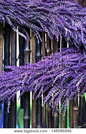 Purple lavender flowers strewn across dark bamboo background