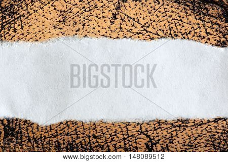 Ragged Piece Of Paper On Leather