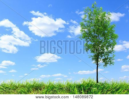 Green Ash Tree On Blue Sky