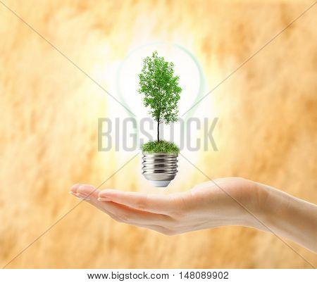 Green Ash Tree Inside Lamp
