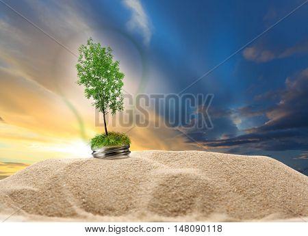 Green Ash Tree Inside Lamp In Sand On Sunset