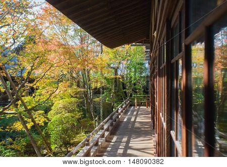 Autumn leaves and Autumn tree in japanese garden