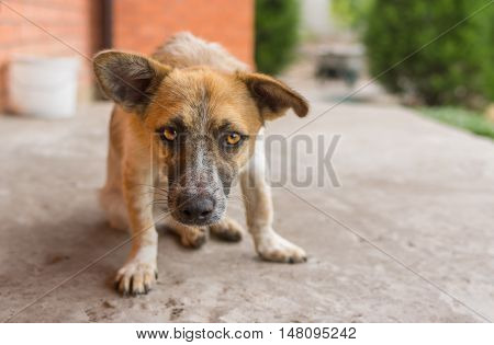 Outdoor portrait of small mixed breed dog looking with threat