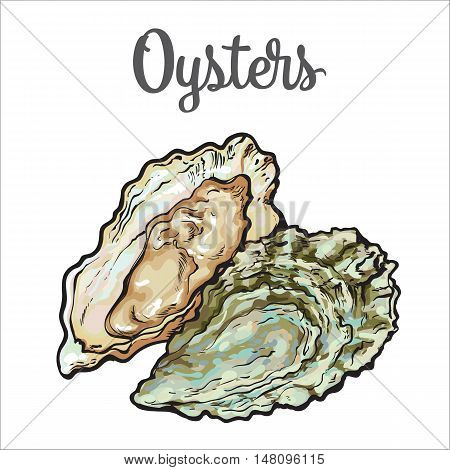 Fresh oyster, sketch style illustration isolated on white background. Drawing of oysters as luxury seafood delicacy. Edible underwater creature, healthy organic seafood or shellfish food