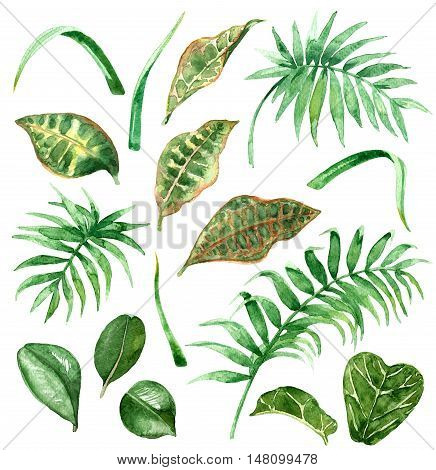 Raster green set of most recognizable elements of a wild tropical nature. Elements for decorating and design, illustration for special books, floristry, maps, children goods and printed production.