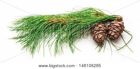Two Pine Cones With Fir Branch