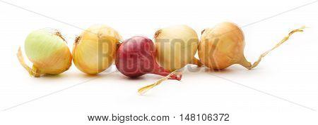 Fresh Onion On The White Background