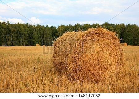 Harvested field with hay bales. gold autumn