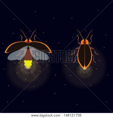 Firefly bug with open and closed wings on dark background. Bug glowworm symbol. Luminous lightning bug isolated vector illustration. Two fireflies glowing at night. Perfect for your design.