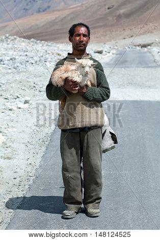Tibetan Nomad With Goatling In Ladakh, India