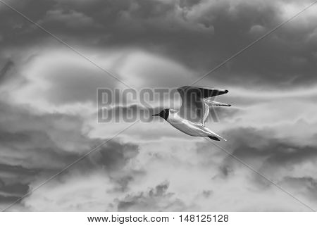 Artistic photo of wild bird flying upward in dark heavens.