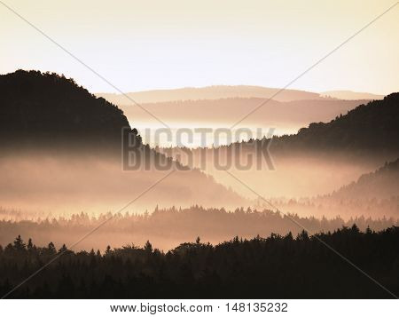 Cold Golden Spring Daybreak. Peaks Of Forests Increased From The Yellow And Orange Fog