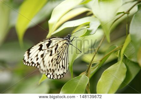 Colorful exotic Butterfly sitting on a Leaf Close up 4