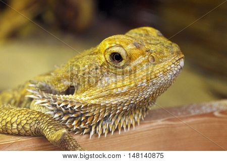 Green colored skin lizard a nice reptile close up 2