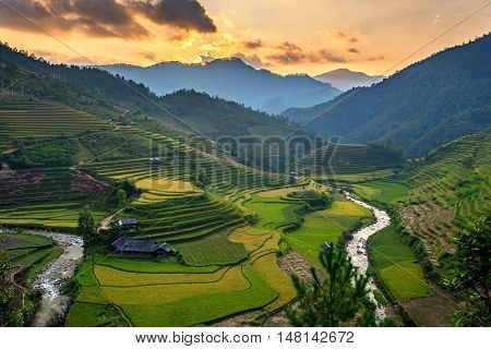 Rice field on Terraces panoramic hillside with rice farming on mountains beautiful shape in nature. It named in top ten world's most beautiful landscapes man-created in Lapantan Mu Cang Chai Yen Bai Vietnam