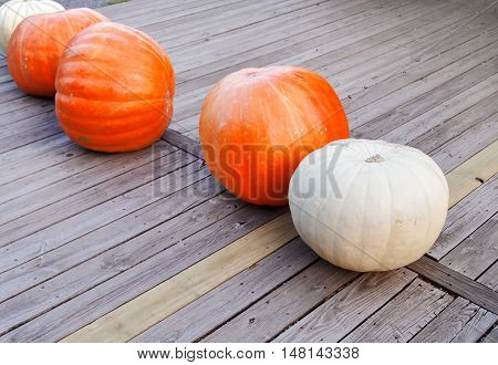 A small grouping of very large orange and white pumpkins on a wooden deck in the fall.