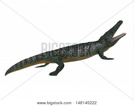 Archegosaurus Side Profile 3D Illustration - Archegosaurus was an amphibian tetrapod that lived in Europe during the Permian Period.