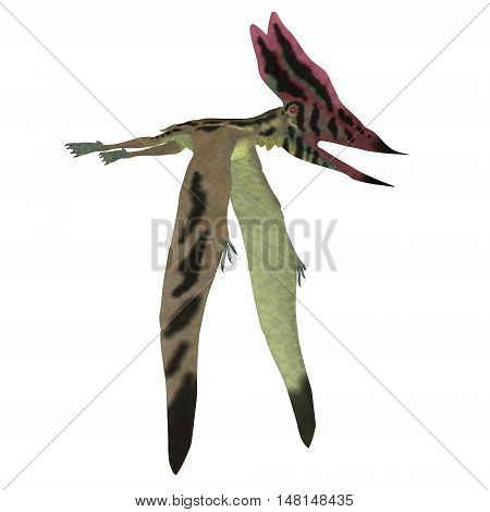 Thalassodromeus Pterosaur on White 3D Illustration - Thalassodromeus was a carnivorous pterosaur that lived in Brazil in the Cretaceous Period.