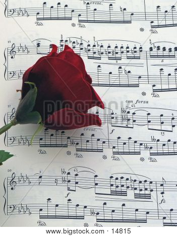 Musik-Rose
