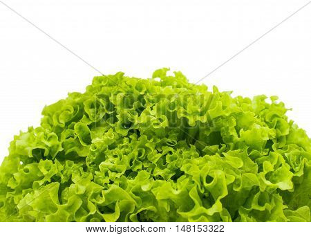 green lettuce leaves isolated on white background