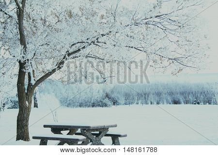 Soft wintery landscape, beautiful tall tree hanging over snow covered bench, frosted white sky and snowy trees in behind.
