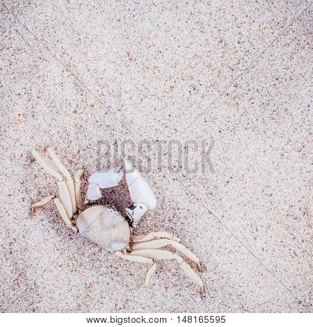 White Crab On Beach Sand For Summer And Beach Concept. Studio Shot Beach Background.