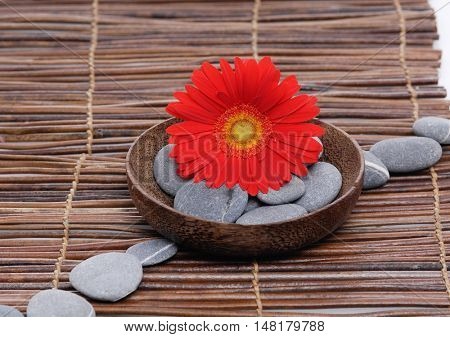 Red gerber with gray stones in bowl on mat