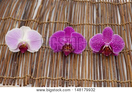 Three pink and white orchid on bamboo mat