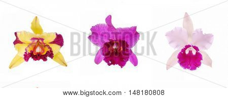 Set of three Blossoming Orchids