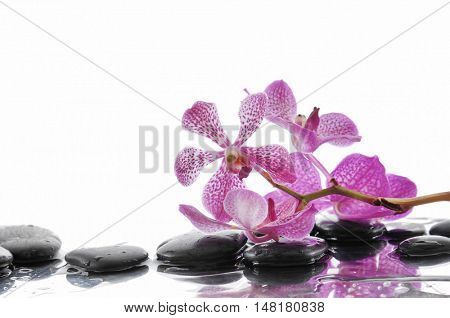 zen stones and branch pink orchid