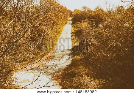 Dirt Road With Trees On Either Side