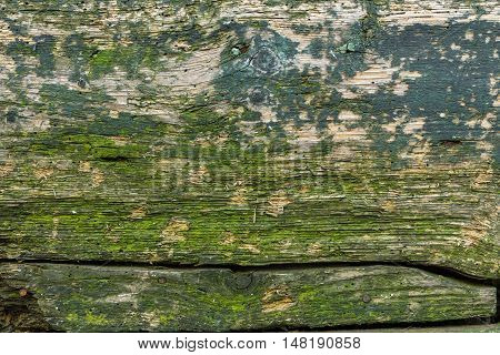 Wood texture with weathered look old and green.