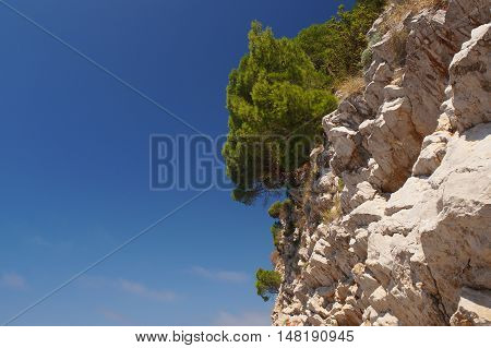 Guardian Of The Horizon Montenegro, With A Lovely Fragrant Pine Forest