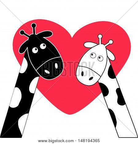 Cute cartoon black white giraffe boy and girl Big heart. Camelopard couple on date. Funny character set. Long neck. . Happy family. Love greeting card with little hearts. Flat design. Isolated. Vector