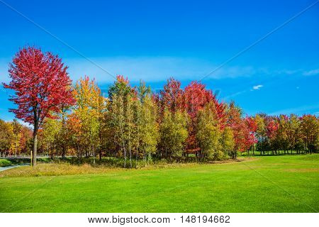 The concept of active tourism. Multi-colored trees stand out beautifully against the blue sky. Golden autumn in French Canada