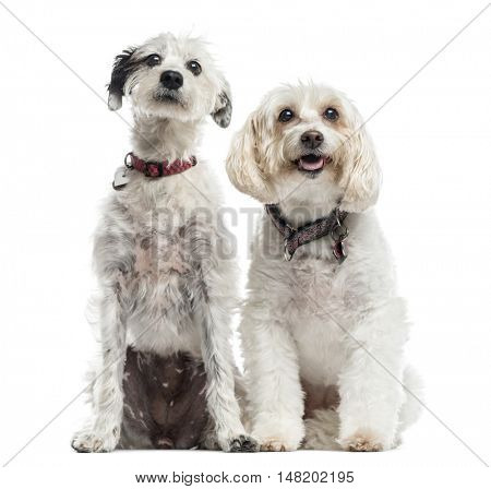 Two Mixed-breed dogs, 13 and 3 years old, sitting together, isolated on white