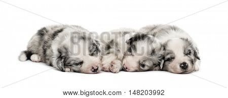 Front view of a Group of crossbreed puppies sleeping isolated on white