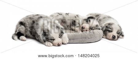 Group of crossbreed puppies sleeping in a crib isolated on white