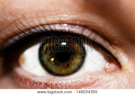 makro photo of female dark green eyes
