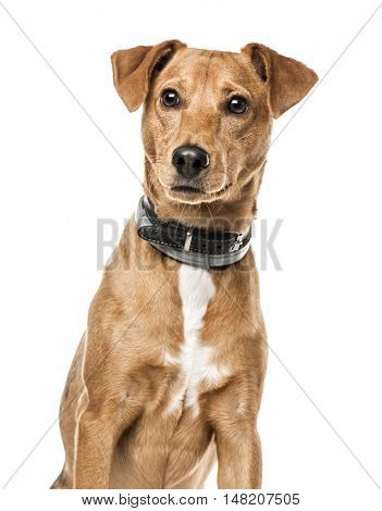 Close-up of Cross-breed dog, 11 months old, isolated on white