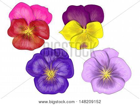 set of pansy isolated on a white background